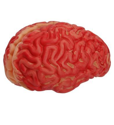 Blutiges Gehirn - menschliche Größe